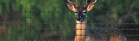 Deer and Dangerous Fences